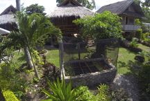Mayas Native Garden / Moalboal and Panagsama Beach is a perfect place to make your vacation. Mayas offers quality accommodation. Cottage style in beautiful surroundings and with friendly staff to help you relax and unwind.