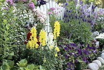 Flowers - Gardening