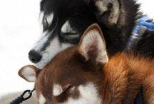 Furry Friends / by hannah ♥ {provinzkindchen}