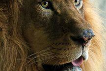 Tatuajes leones