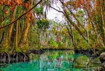 Springtime in Florida / Fun things to see and do in Florida in the spring!