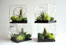 γυαλες με φυτα
