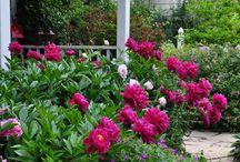 Haven  / Skønne blomster og hyggelige nips giver frirummet i haven en særlig plads.  Her er et udvalg af ønsker og ideer