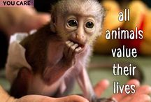 Help Animals / Helping animals quotes and images Animals welfare quotes and images