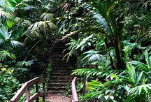 Paisajes / La mejor vista la tienes sólo en Arashá. Visita Arashá y deja a un lado el estrés disfrutando de hermosos paisajes en medio de la belleza y tranquilidad que te ofrece el bosque tropical.