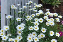 < Flowers in my Garden > / by Jennifer Hill