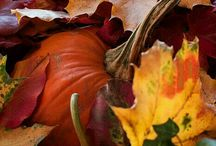 In love with Autumn!