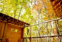 outdoors garden and glamping