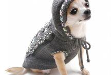 Mode canine ❤️chichi