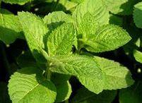 Травы / Статьи о пользе и вреде трав