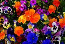 Marea di colori in fiore.