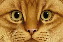 Great pictures of cats