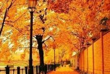autumn ...herfst