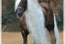 Hnědí koně / hnědí koně