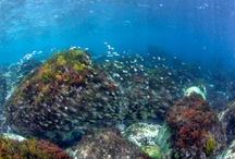 Underwater photography / tokyo bay