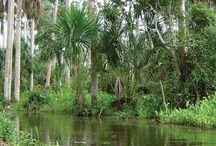 Jungle / mei 2015