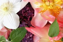 Flowers / by Marilyn Kudra