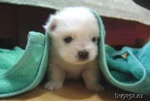 Fuzzy Little Ones