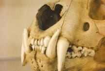 skeletal specimen