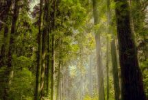 SCENE • Forest
