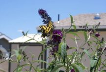Birds, Butterflies & The Great Outdoors / We live near the National Butterfly Center in Mission, TX &  our community, Retama Village, is landscaped to attract the butterflies & hummingbirds