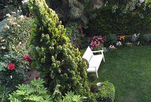 Bahçemiz
