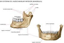 odontologia / ODONTOLOGÍA Melania brito  Yaiza gomez  Yaiza guedes Emilio alexandrof Cristina valeron