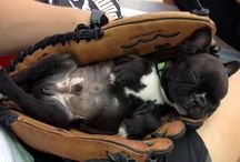 Dogs / Dogs Cuccioli Cani