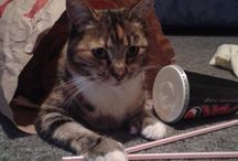My cat tabatha