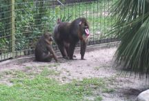 Zoos Nature / pictures from my trips to the Jacksonville Zoo or other places with animals and nature