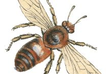 Graphics: Bees