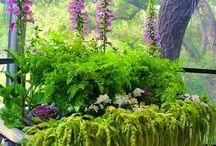 Paisagismo / Jardins, vasos plantas e arranjos