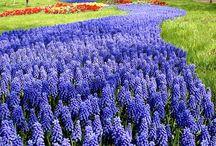 Virág, kert, garden, flowers