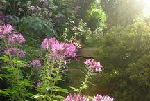 Mon jardin / Photos perso