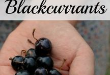 Black currants, so gooood