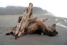 large dry driftwood