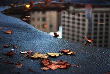Autumn / by Monia Ann