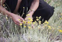 plant and flower essences