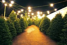 Christmas tree lots  / by D Rex