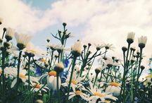 Fondo flores