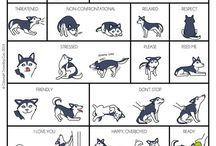 body language dog