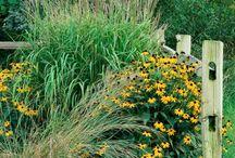 Corner Fence Garden