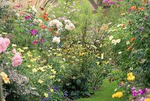 Ogrór - pomysły na rośliny