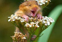Dünyanın En Güzel Gülümsemeleri / Galerinin devamı ajanimo.com'da.. http://www.ajanimo.com/bu-kadar-da-mutlu-olunur-mu/