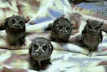 Owls / Yes