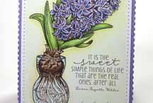 Hyacinth Bulb in Glass
