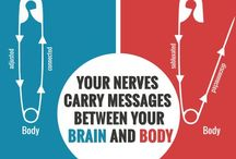 Chiropractic Facts / Educational information about chiropractic.