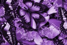 Purple & Lilac Pleasure / by Edwina Washington Poindexter