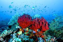 Lokasi Diving Keren di Indonesia / Rekomendasi dive spot di Indonesia bagi Ezytravelers pecinta diving