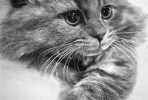 Arts le Miau